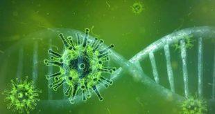 """""""Ευθύνονται"""" τα γονίδια για τη σοβαρή νόσηση από COVID-19; Ποιος ο ρόλος του υποδοχέα TLR7"""
